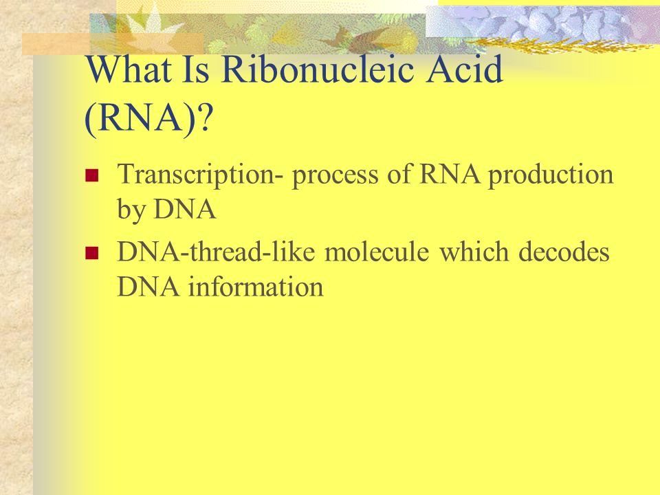 What Is Ribonucleic Acid (RNA)
