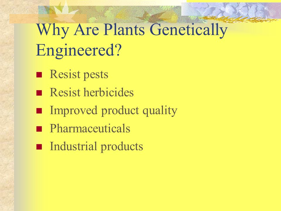 Why Are Plants Genetically Engineered