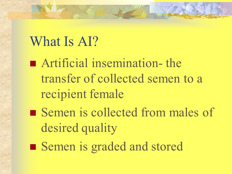 What Is AI Artificial insemination- the transfer of collected semen to a recipient female. Semen is collected from males of desired quality.