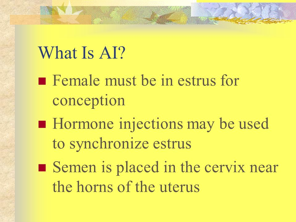 What Is AI Female must be in estrus for conception