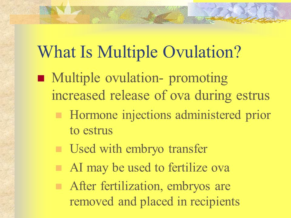 What Is Multiple Ovulation