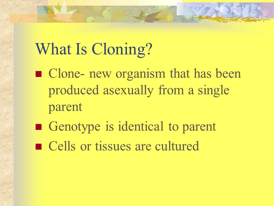 What Is Cloning Clone- new organism that has been produced asexually from a single parent. Genotype is identical to parent.