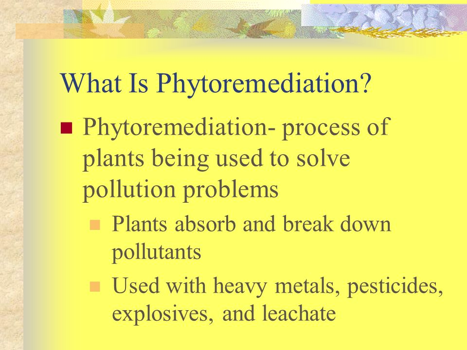 What Is Phytoremediation