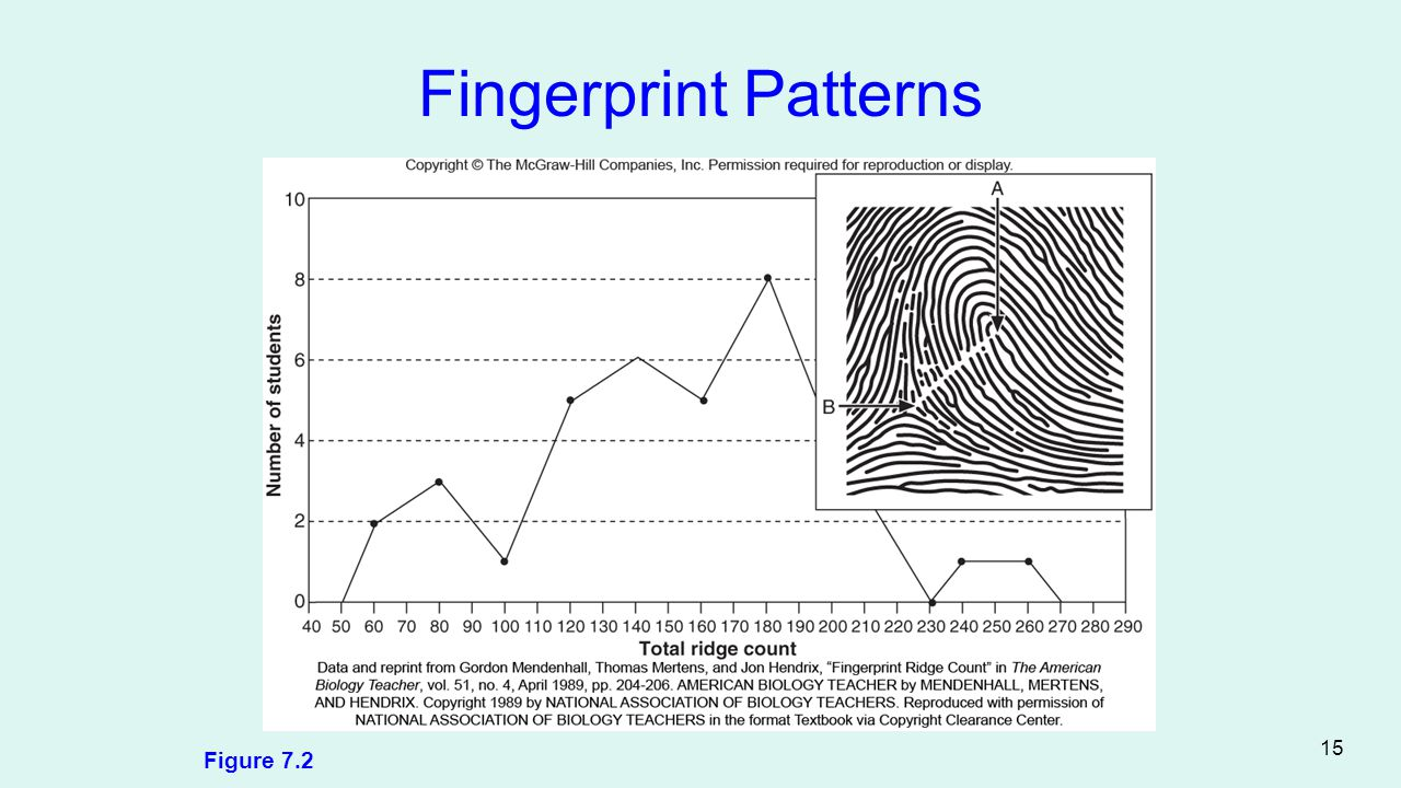 Fingerprint Patterns Figure 7.2 15