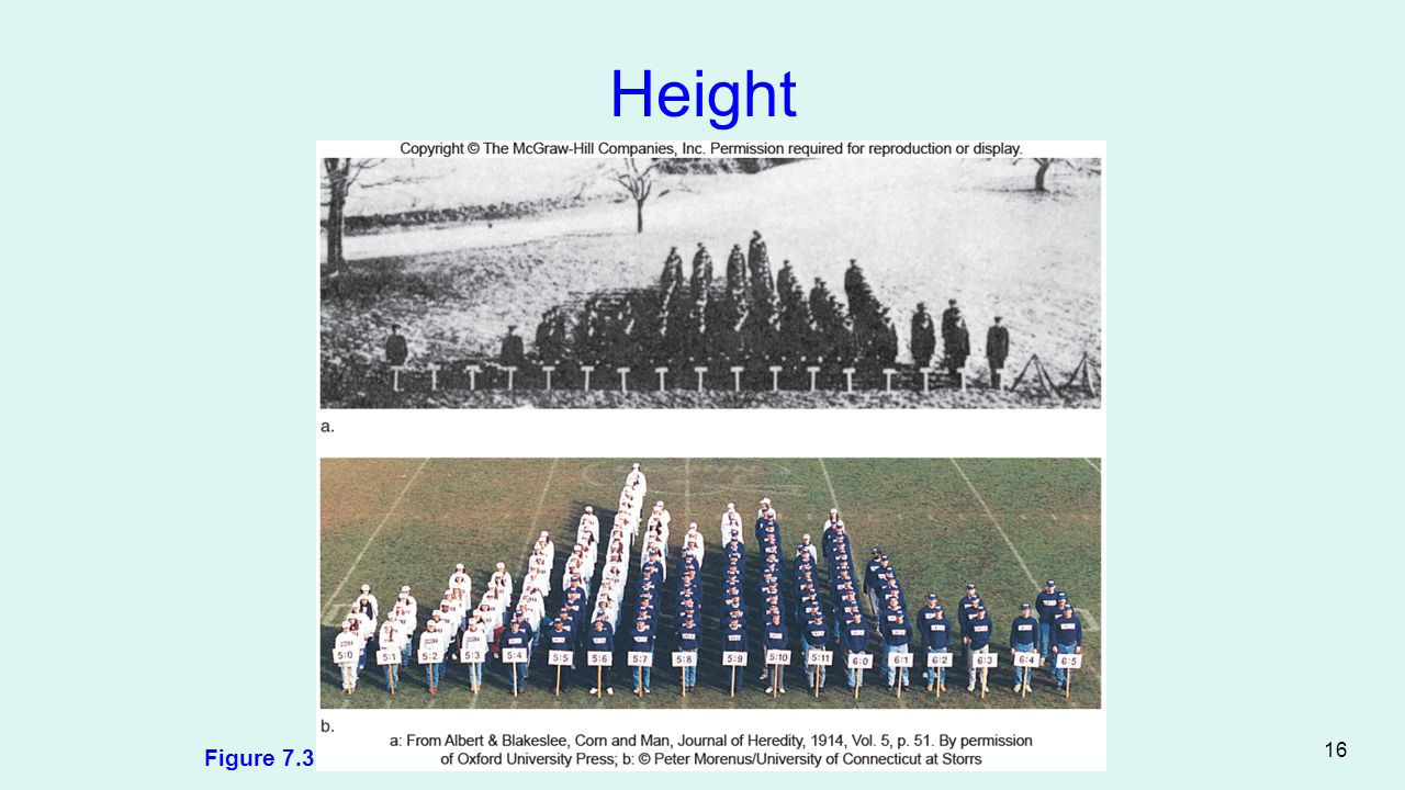 Height Figure 7.3 16