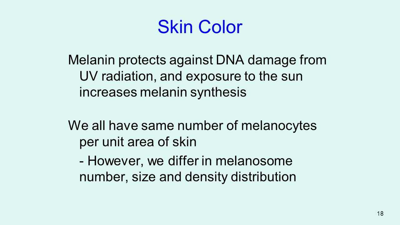 Skin Color Melanin protects against DNA damage from UV radiation, and exposure to the sun increases melanin synthesis.