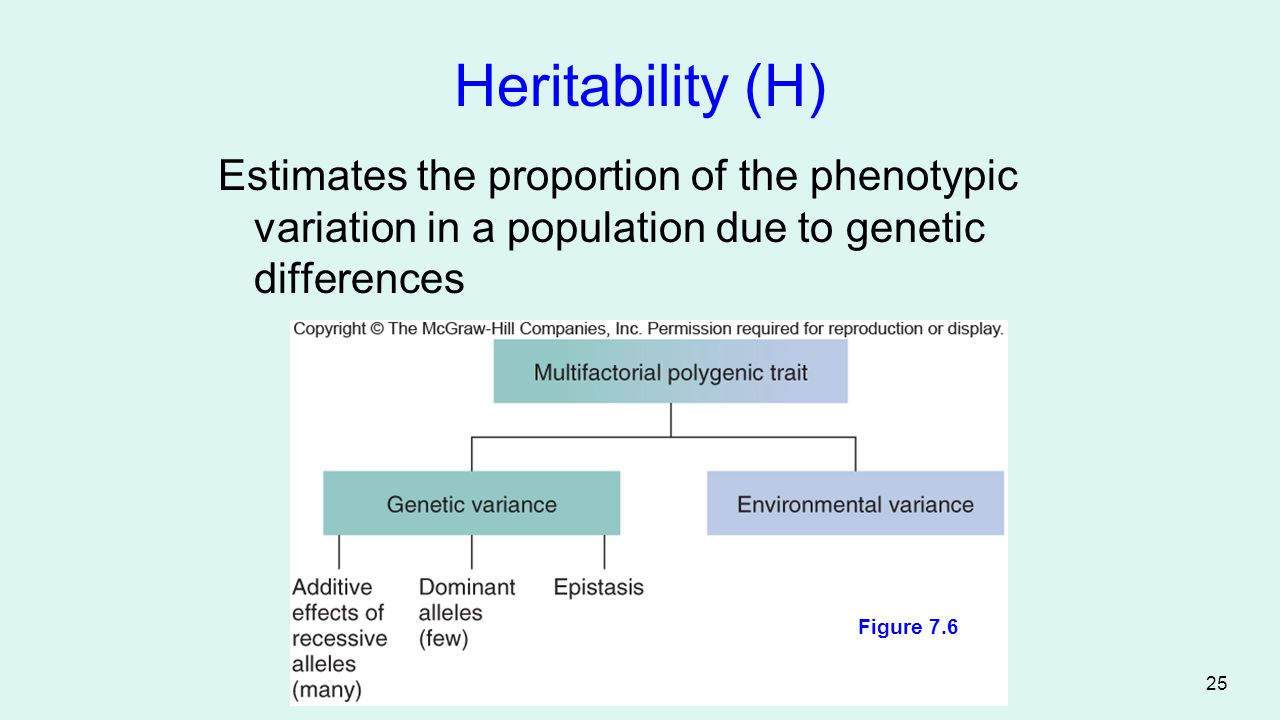 Heritability (H) Estimates the proportion of the phenotypic variation in a population due to genetic differences.