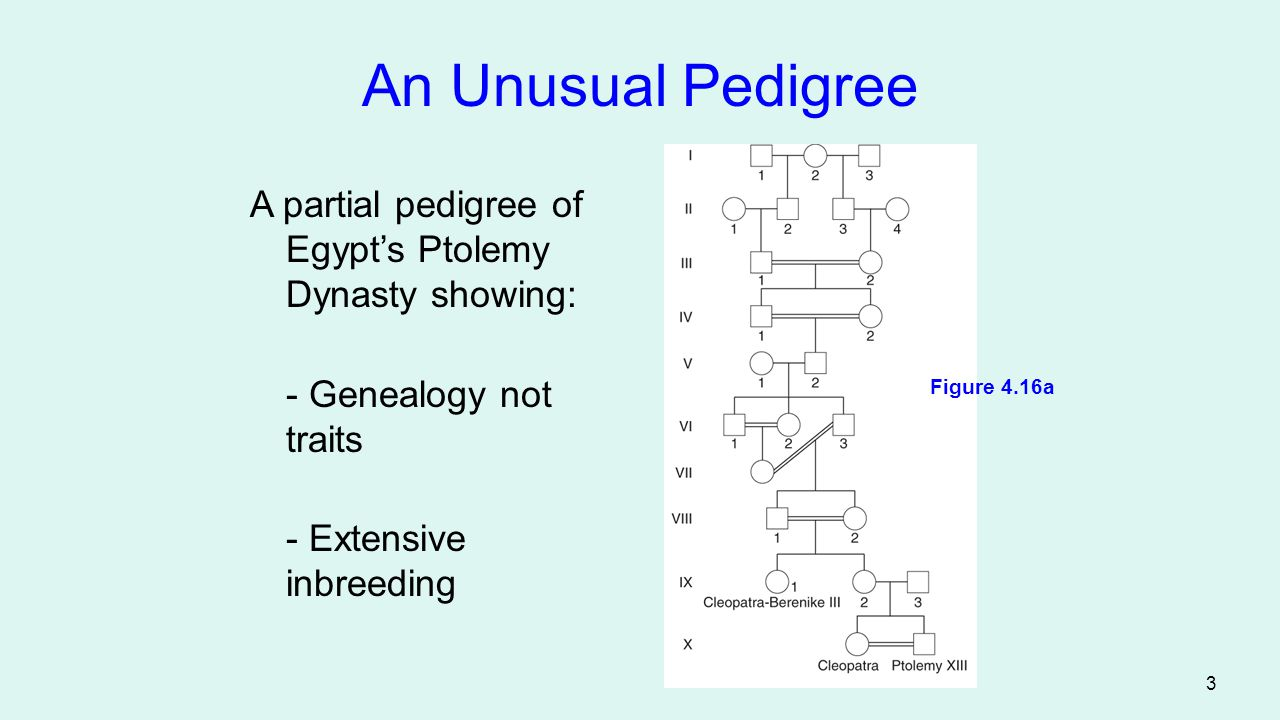 An Unusual Pedigree Figure 4.16a. A partial pedigree of Egypt's Ptolemy Dynasty showing: - Genealogy not traits.