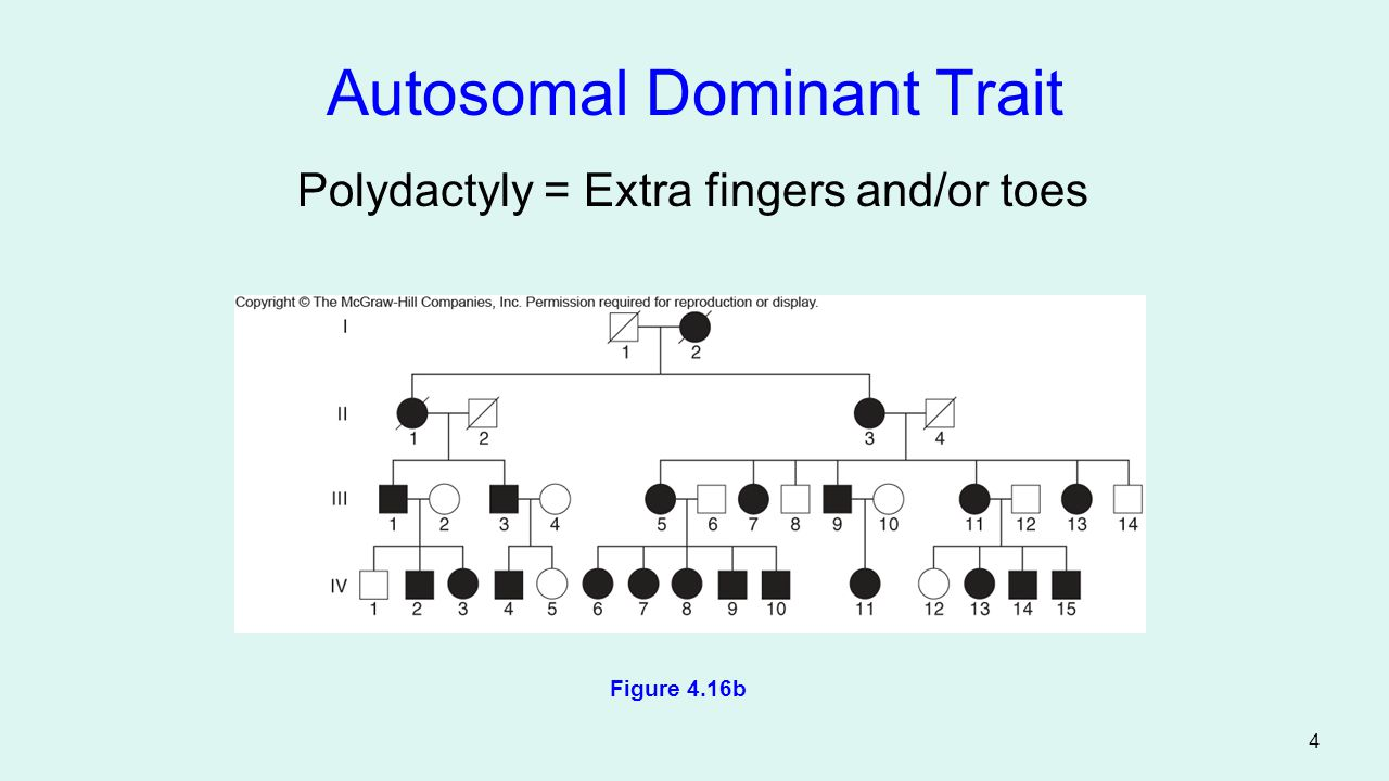 Autosomal Dominant Trait