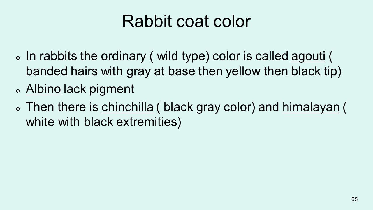 Rabbit coat color In rabbits the ordinary ( wild type) color is called agouti ( banded hairs with gray at base then yellow then black tip)