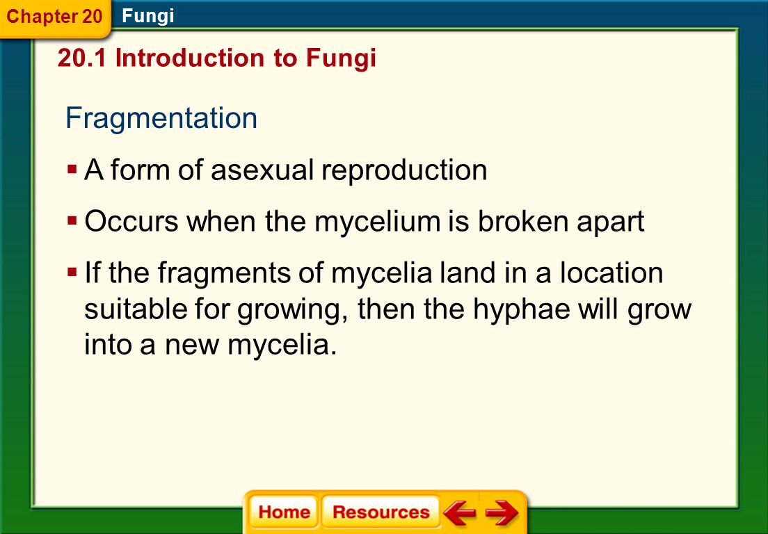 A form of asexual reproduction