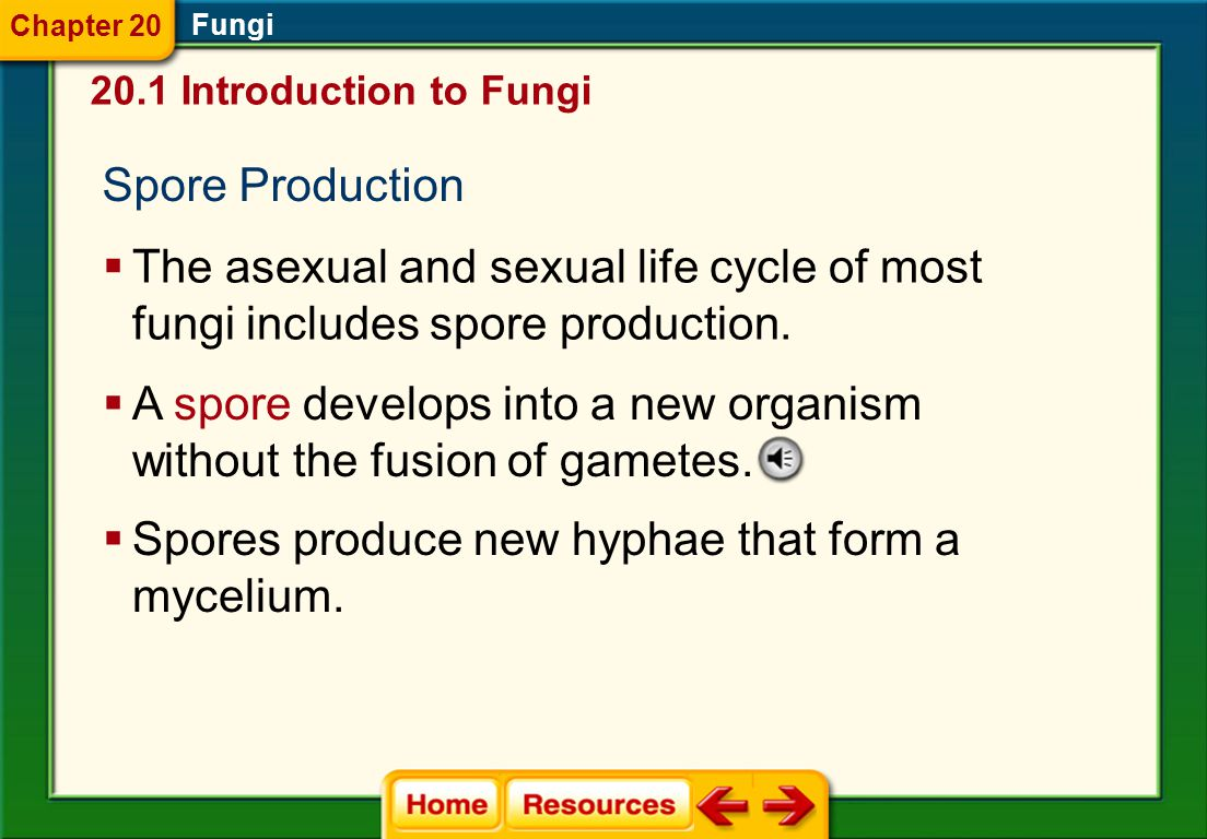 A spore develops into a new organism without the fusion of gametes.