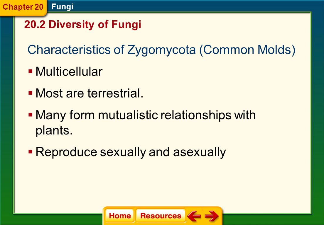 Characteristics of Zygomycota (Common Molds)