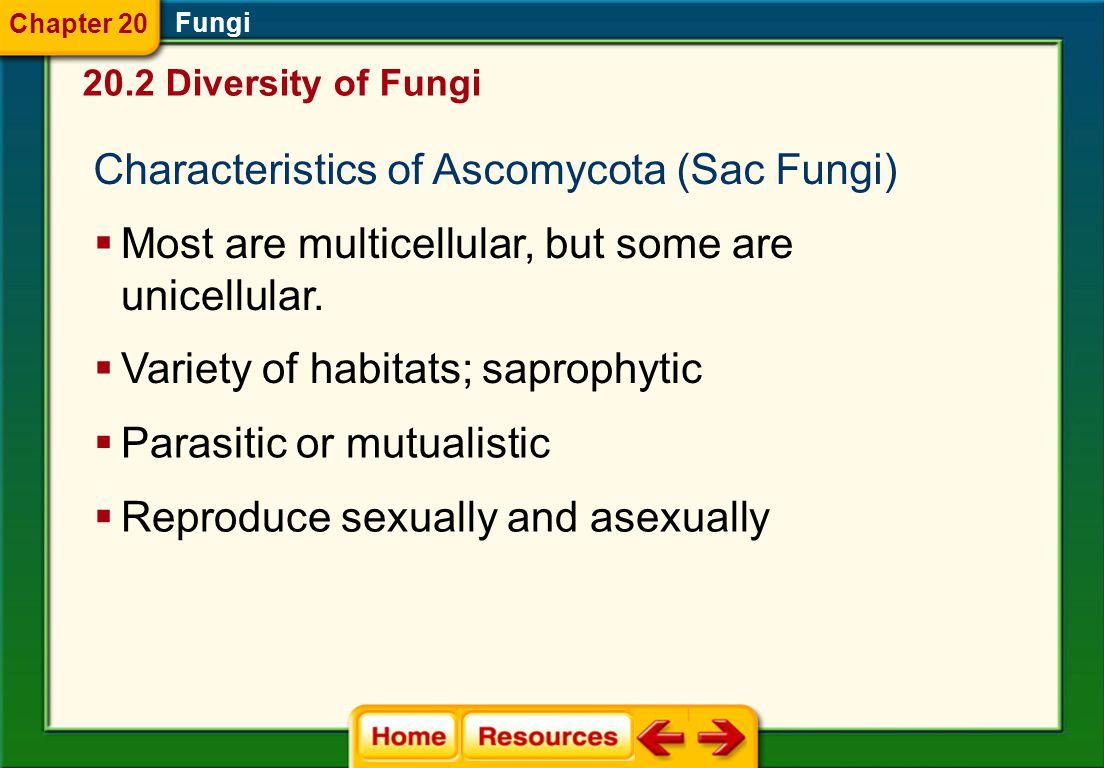 Characteristics of Ascomycota (Sac Fungi)