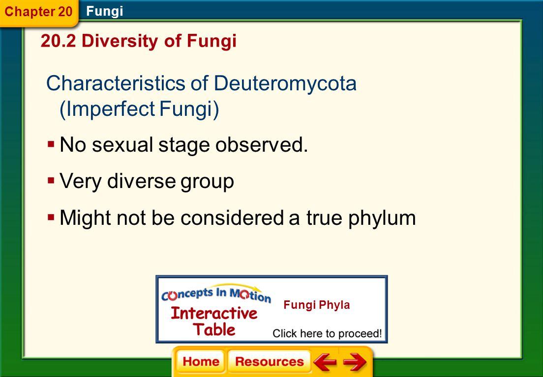 Characteristics of Deuteromycota (Imperfect Fungi)