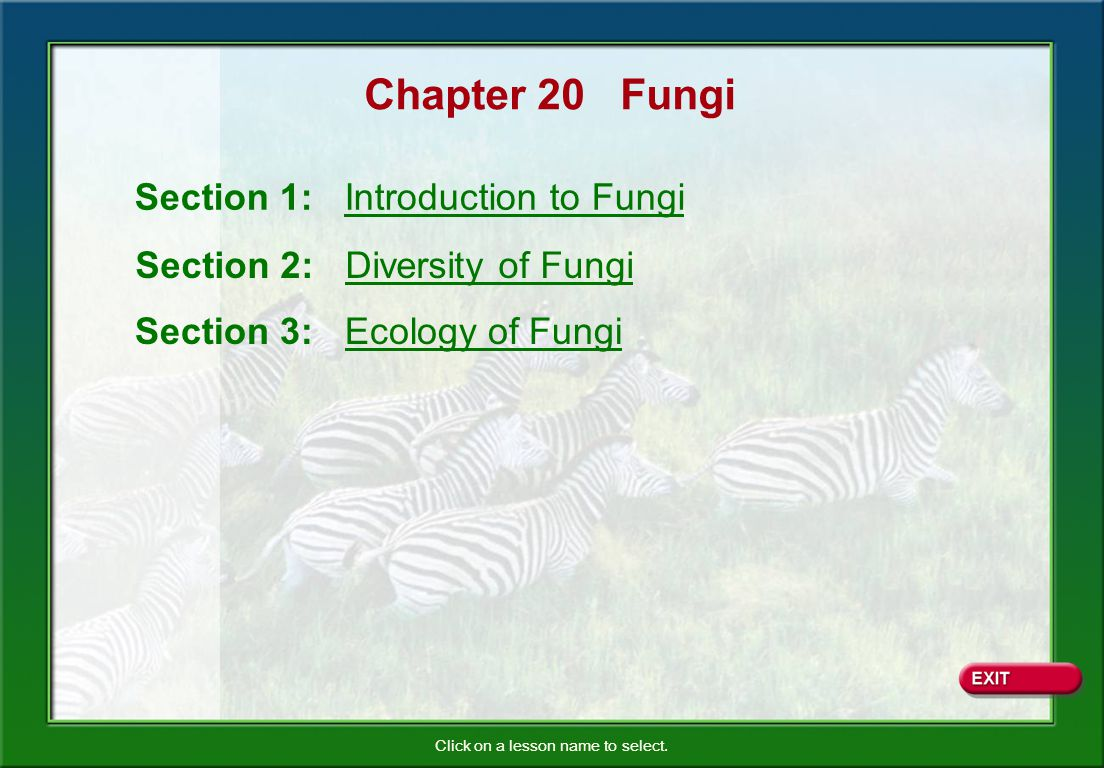 Chapter 20 Fungi Section 1: Introduction to Fungi