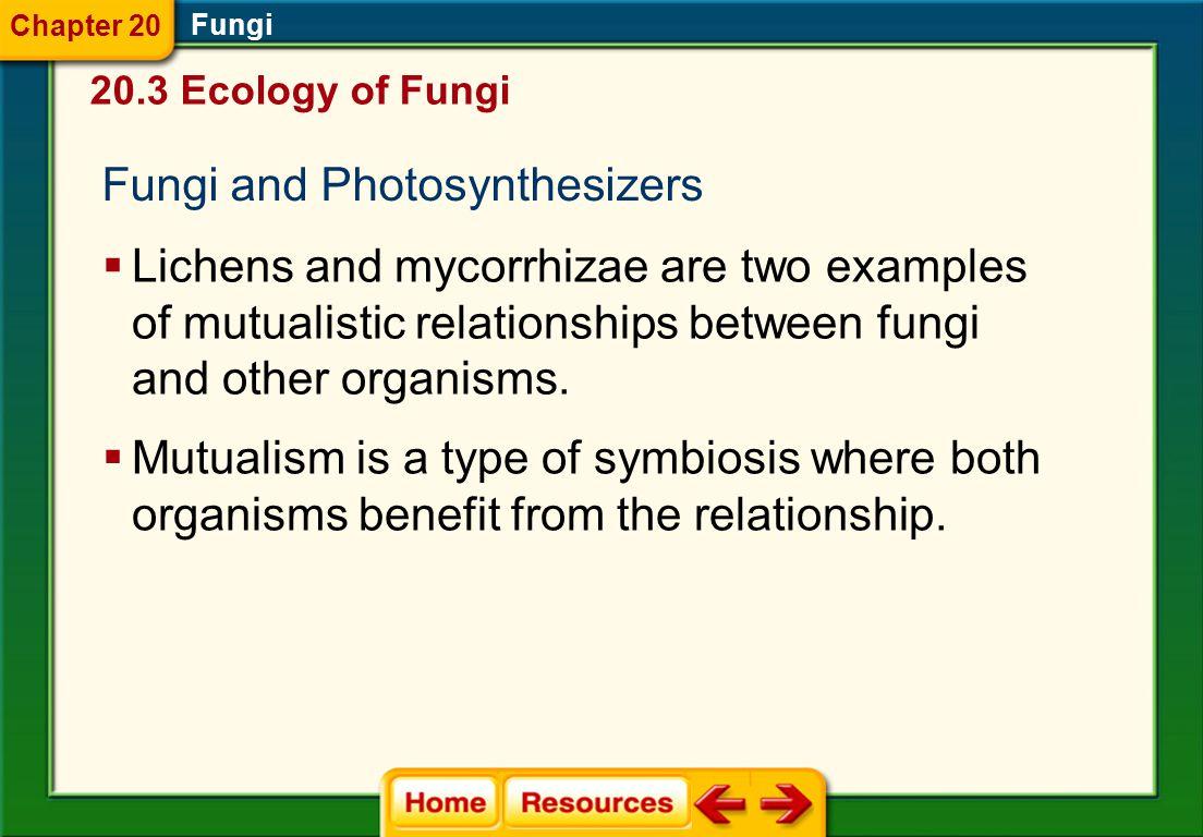 Fungi and Photosynthesizers