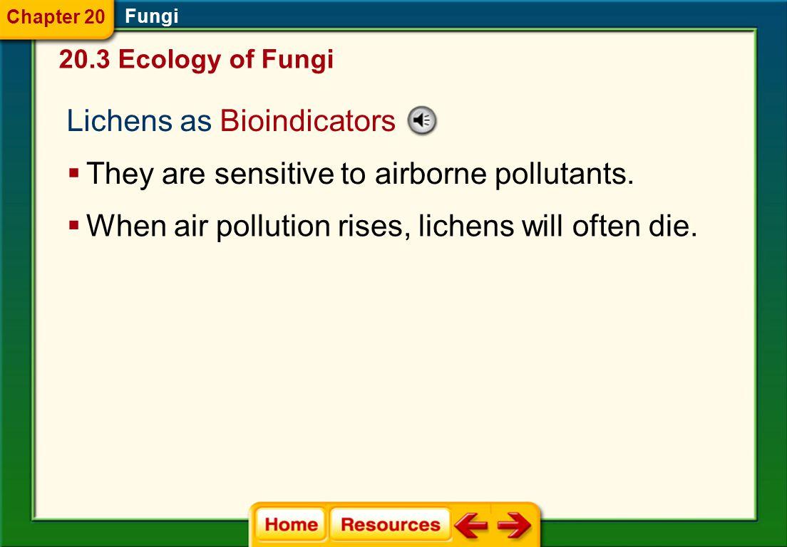 Lichens as Bioindicators