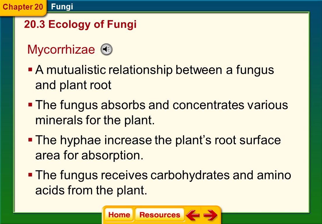 A mutualistic relationship between a fungus and plant root