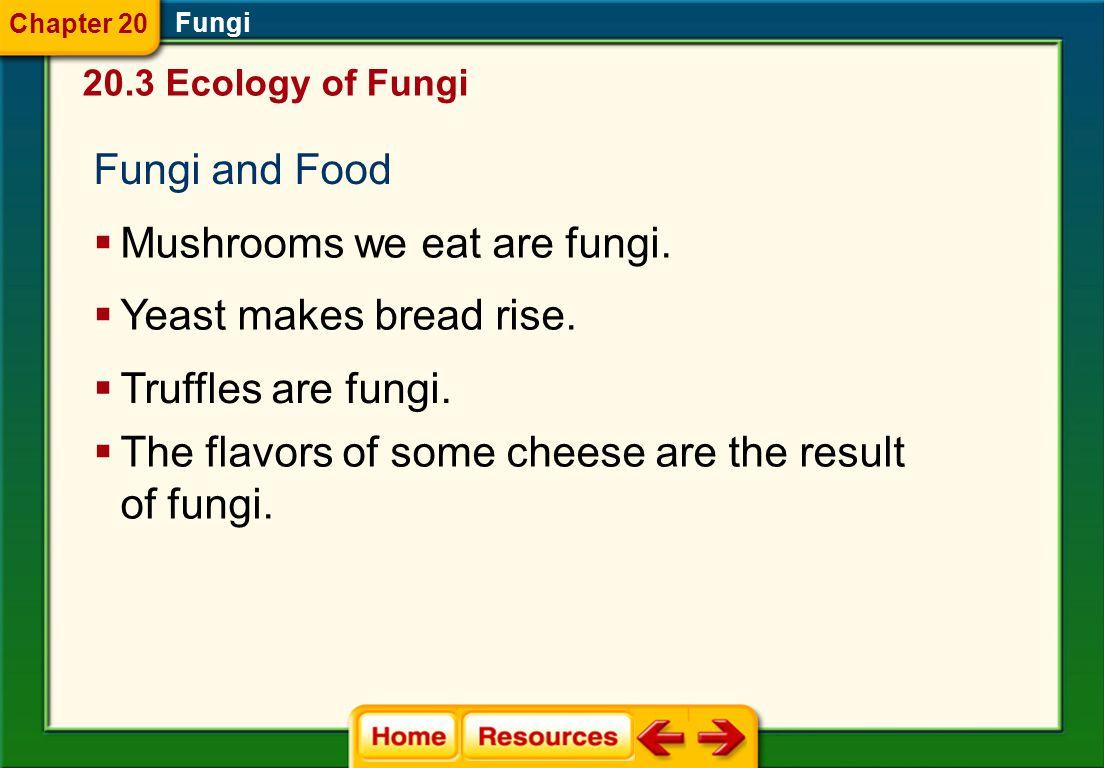 Mushrooms we eat are fungi.