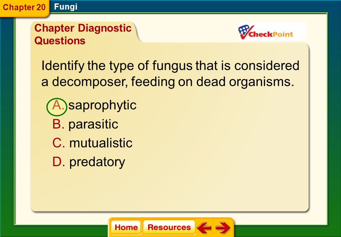 Identify the type of fungus that is considered