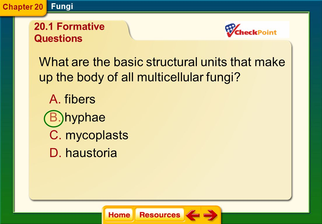 What are the basic structural units that make