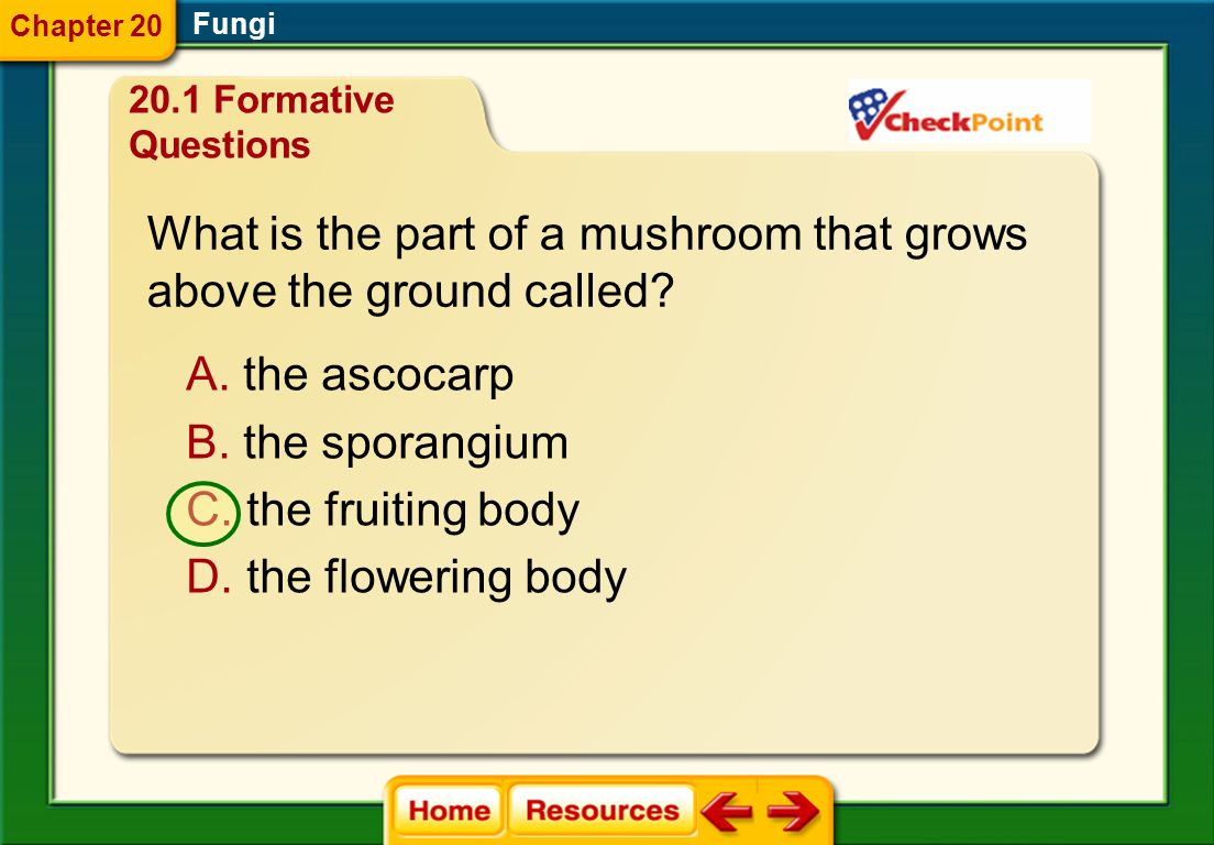 What is the part of a mushroom that grows above the ground called