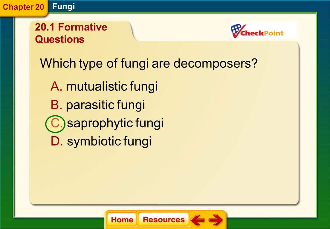Which type of fungi are decomposers