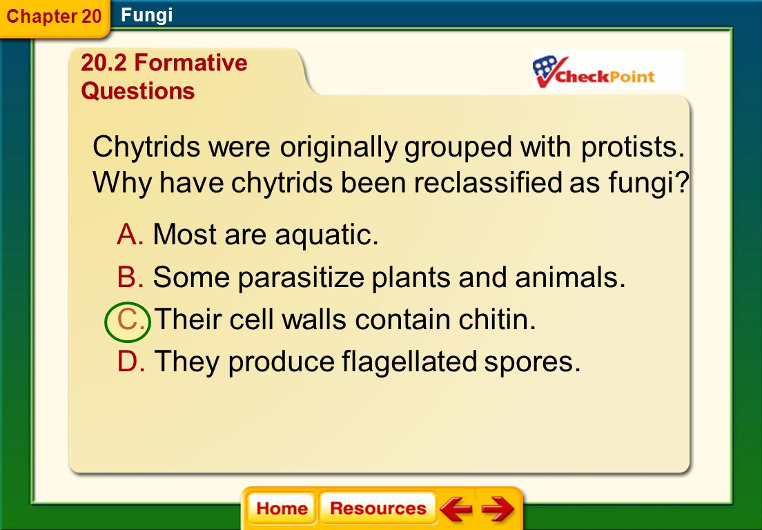 Chytrids were originally grouped with protists.