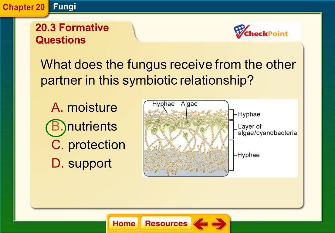 What does the fungus receive from the other