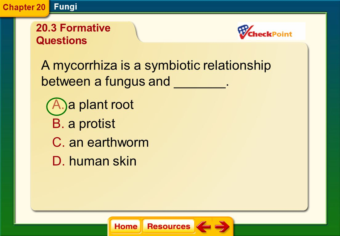 A mycorrhiza is a symbiotic relationship between a fungus and _______.