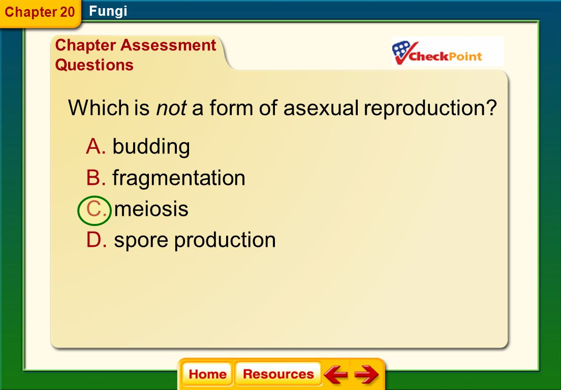 Which is not a form of asexual reproduction