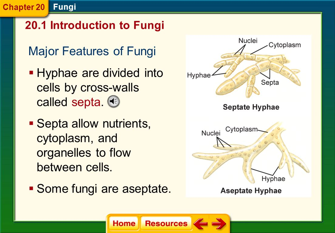 Major Features of Fungi