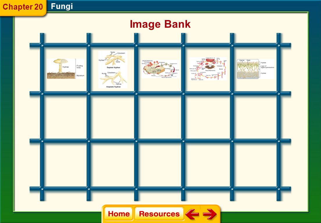 Chapter 20 Fungi Image Bank