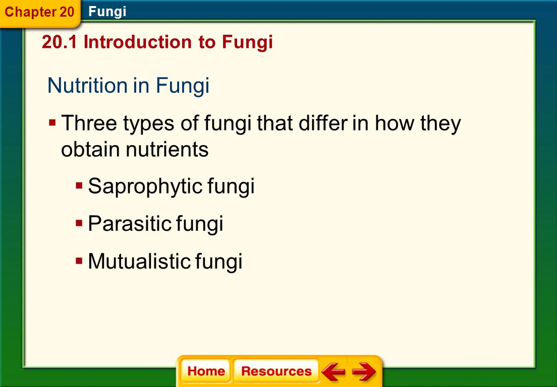 Three types of fungi that differ in how they obtain nutrients