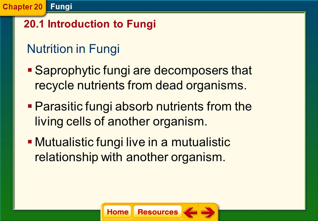 Chapter 20 Fungi. 20.1 Introduction to Fungi. Nutrition in Fungi. Saprophytic fungi are decomposers that recycle nutrients from dead organisms.