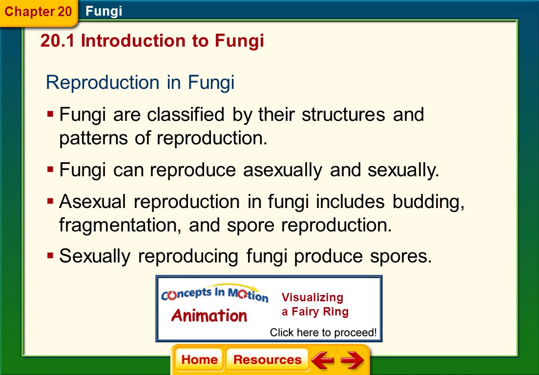 Fungi are classified by their structures and patterns of reproduction.