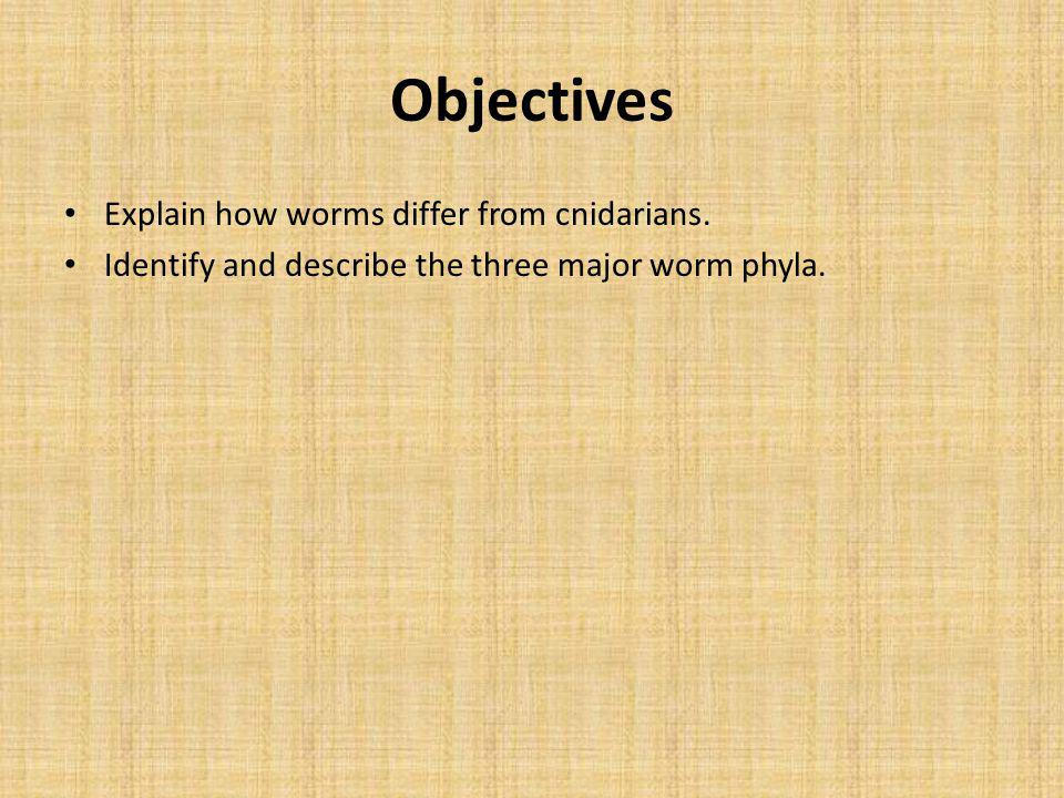 Objectives Explain how worms differ from cnidarians.
