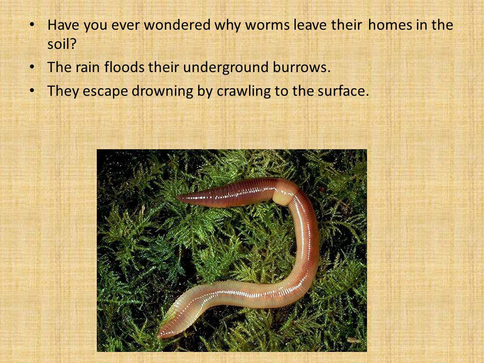Have you ever wondered why worms leave their homes in the soil