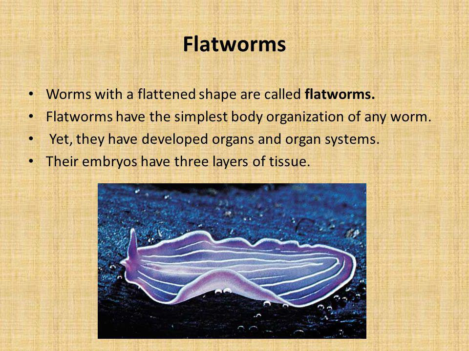 Flatworms Worms with a flattened shape are called flatworms.
