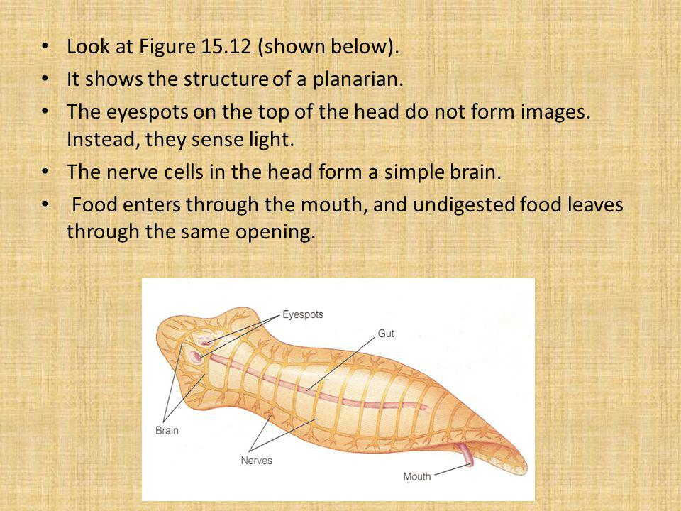 Look at Figure 15.12 (shown below).