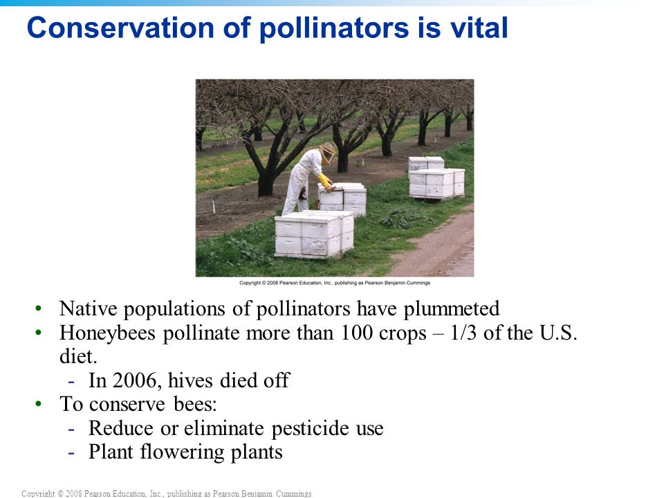 Conservation of pollinators is vital