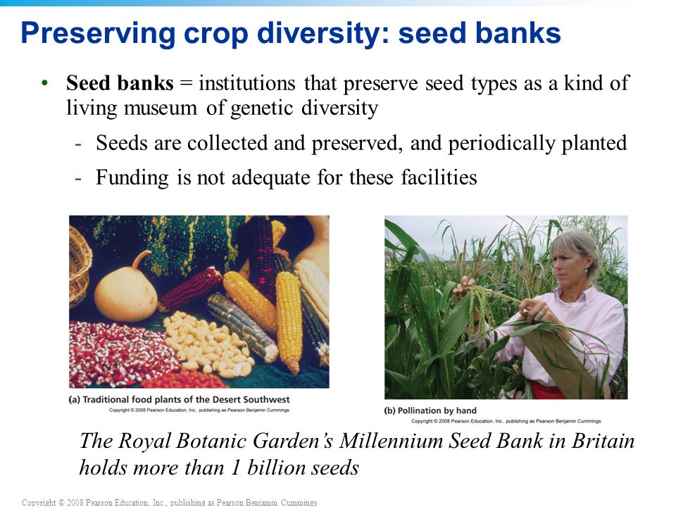 Preserving crop diversity: seed banks