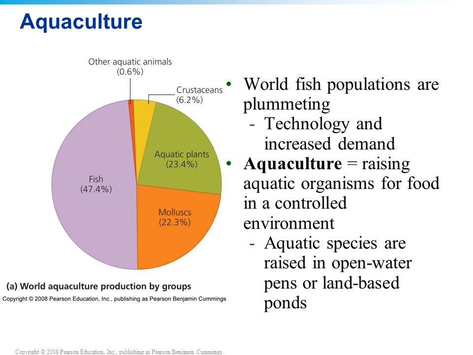 Aquaculture World fish populations are plummeting