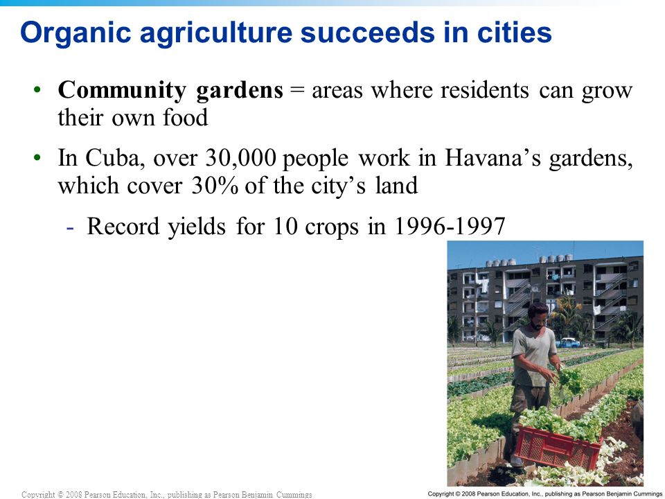 Organic agriculture succeeds in cities