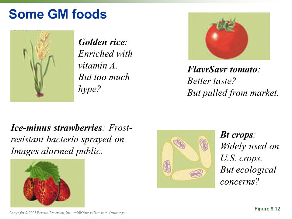 Some GM foods Golden rice: Enriched with vitamin A. But too much hype