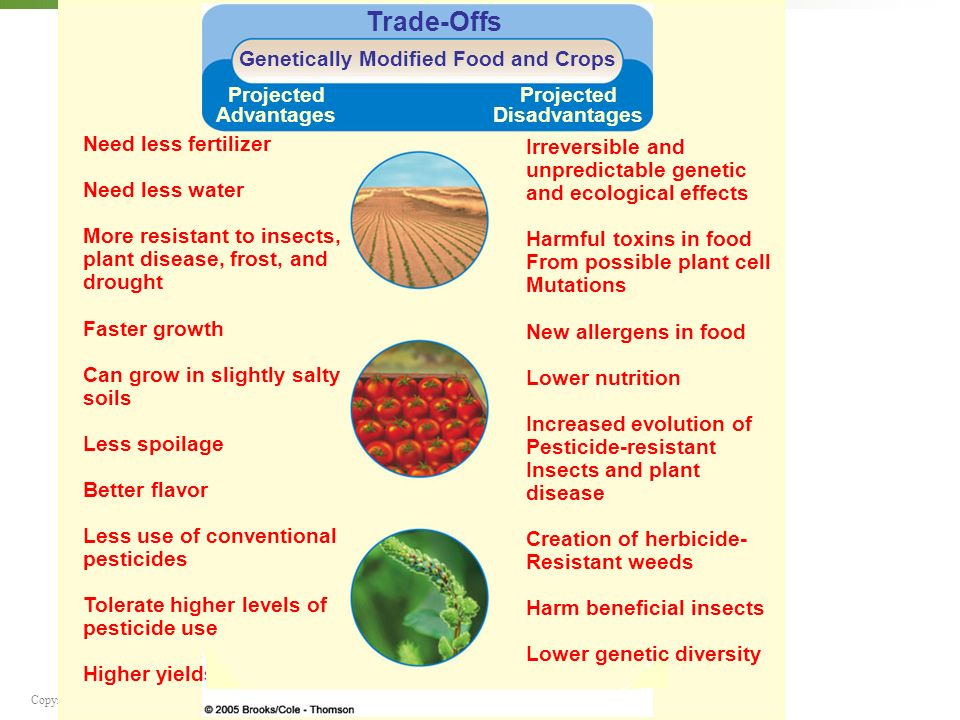 the growing concerns over the health risks of the genetically mortified organisms With public dialogue about gmos at a fever pitch, farm aid is here to sort out the  facts about the problems and concerns for family farmers  diseases by altering  plants' ability to absorb nutrients and reduce soil health by killing microbes   incidents associated with genetically modified organisms (gmos), 1997–2013.