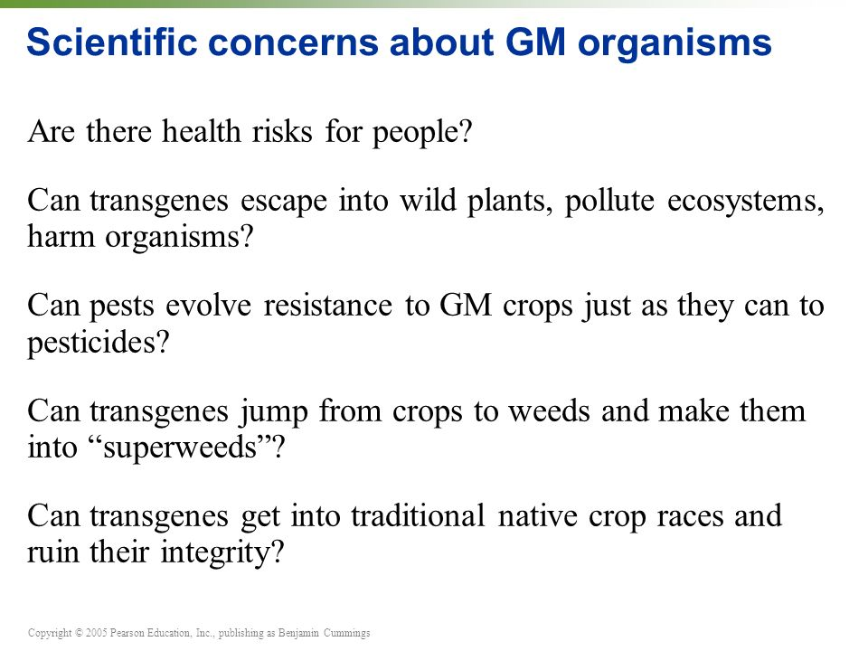 Scientific concerns about GM organisms