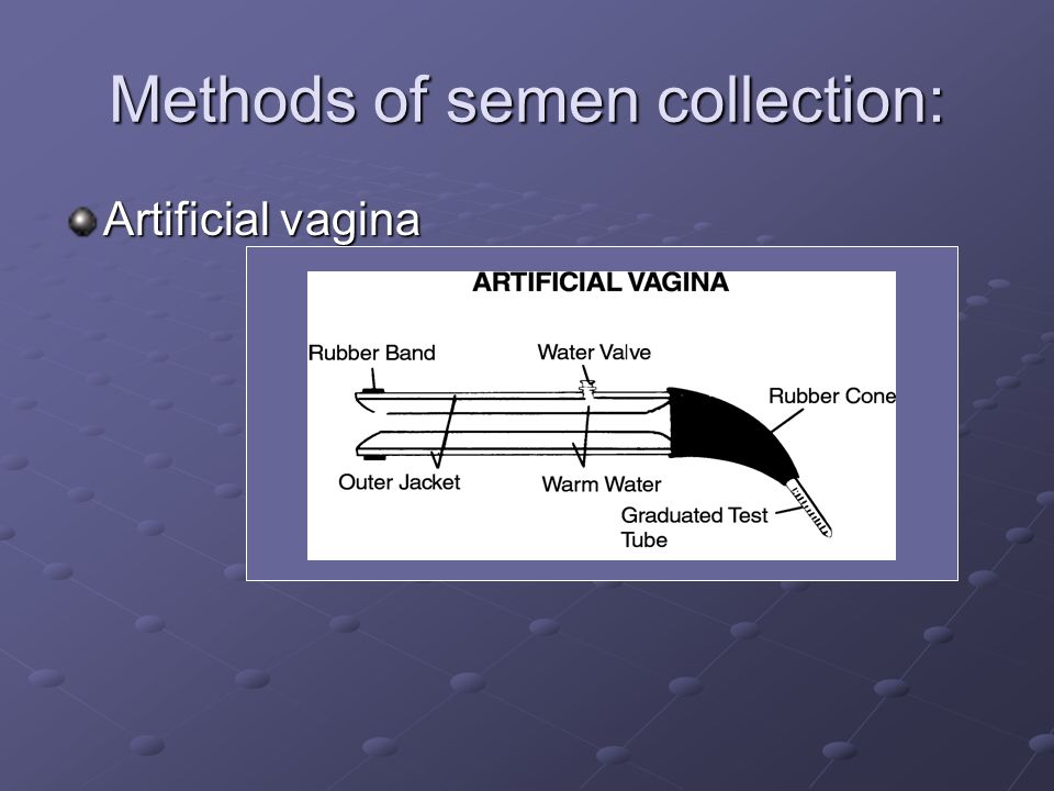 Methods of semen collection: