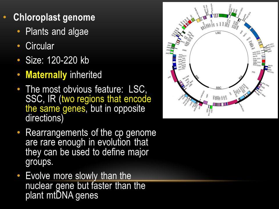 Chloroplast genome Plants and algae. Circular. Size: 120-220 kb. Maternally inherited.